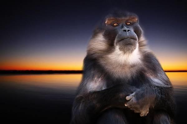monkey-668335_640