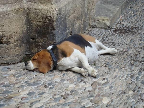 dog-212419_640