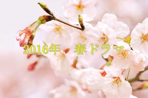 cherry-blossom_00007